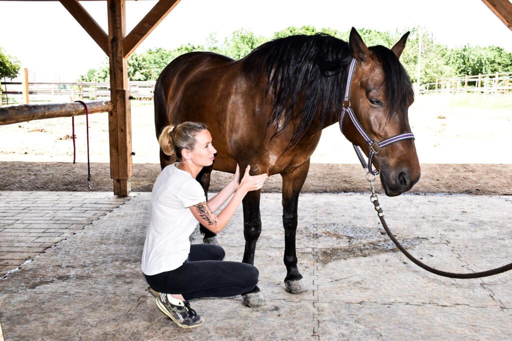 dornova metoda pro koně